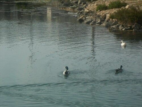 Photo-1-Stop-feeding-our-ducks.JPG